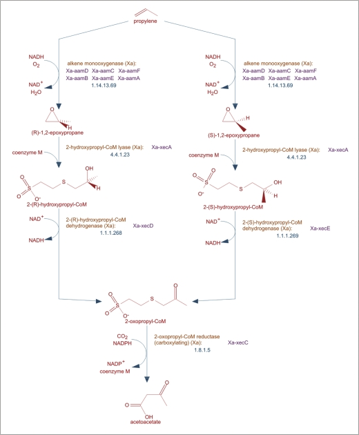 The MetaCyc Database of metabolic pathways and enzymes and the ...