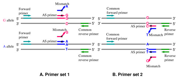 Batchprimer3 A High Throughput Web Application For Pcr And Sequencing Primer Design Abstract Europe Pmc