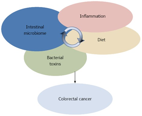Inflammation And Colorectal Cancer When Microbiota Host Mutualism Breaks Abstract Europe Pmc