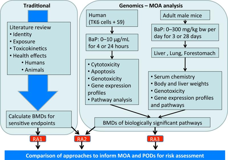 Comparison Of Toxicogenomics And Traditional Approaches To Inform Mode Of Action And Points Of Departure In Human Health Risk Assessment Of Benzo A Pyrene In Drinking Water Abstract Europe Pmc