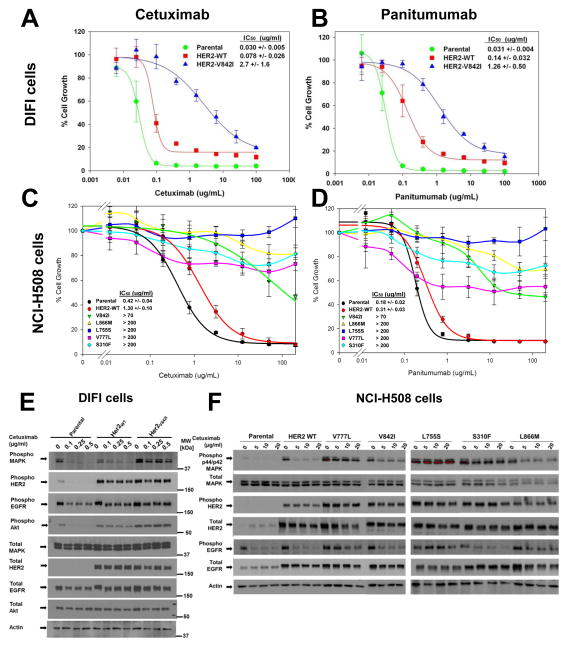 Her2 Activating Mutations Are Targets For Colorectal Cancer Treatment Abstract Europe Pmc