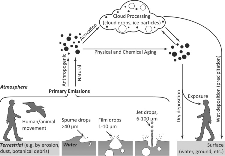 A manual for catching and identifying airborne biological particles The Air Spora