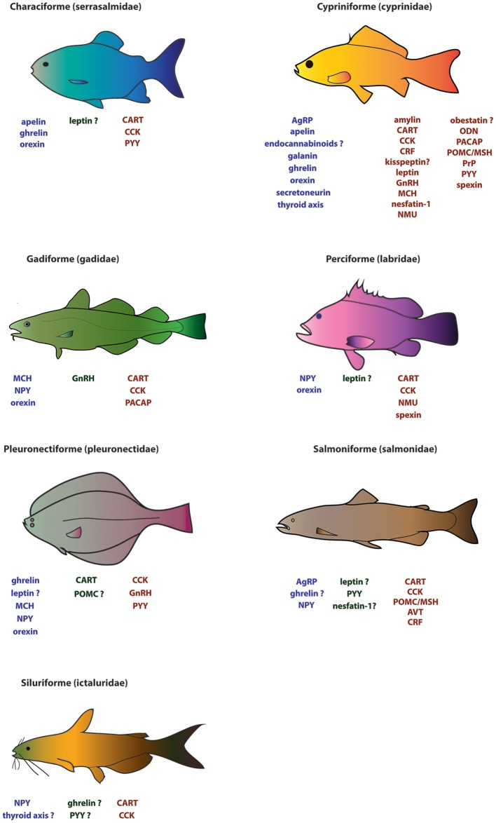 The Neuroendocrine Regulation Of Food Intake In Fish A Review Of Current Knowledge Abstract Europe Pmc While some fish are going to destination. regulation of food intake in fish