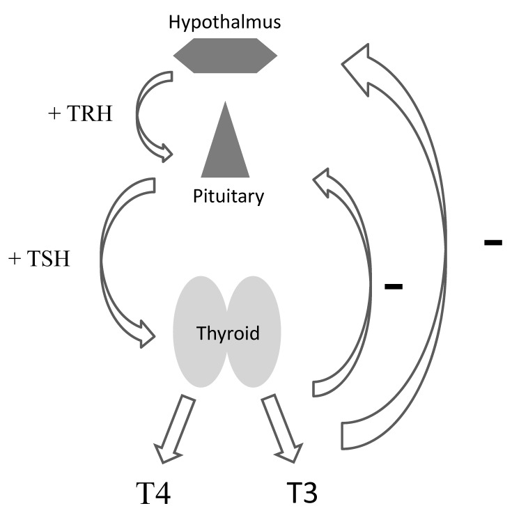 Biochemical Testing Of The Thyroid Tsh Is The Best And
