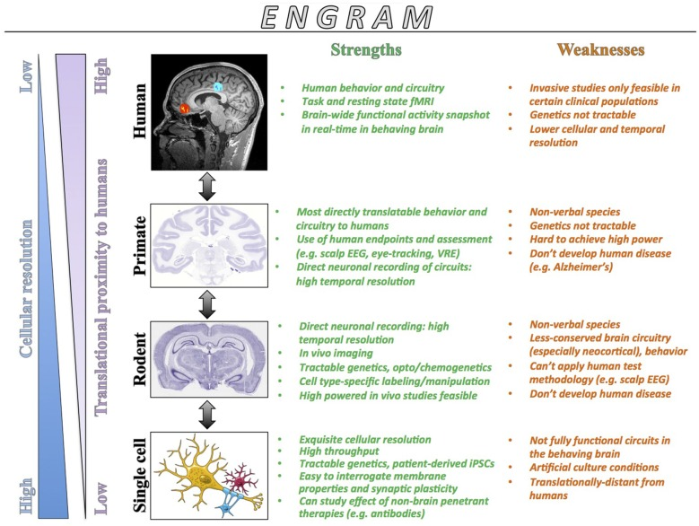 From Engrams To Pathologies Of The Brain Abstract Europe Pmc