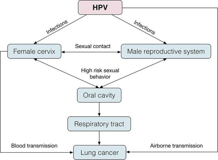 Hpv positive lung cancer Human papillomavirus and lung cancer