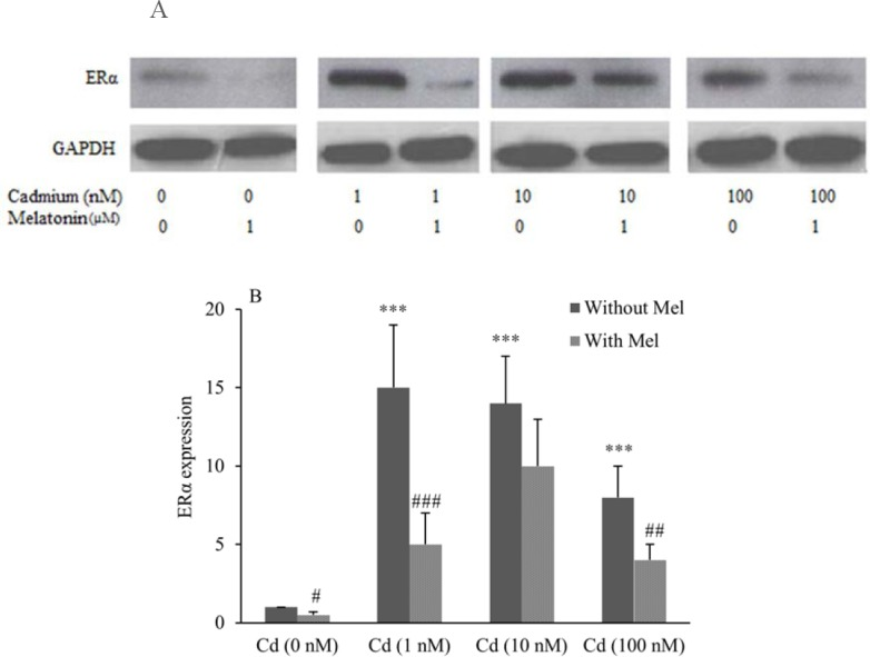 The Protective Role Of Melatonin In Cadmium Induced Proliferation Of Ovarian Cancer Cells Abstract Europe Pmc
