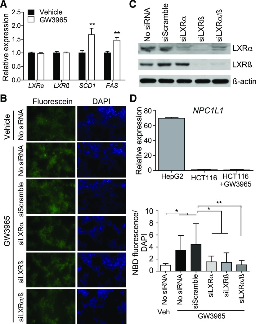 Chronic Activation Of Liver X Receptor Sensitizes Mice To High Cholesterol Diet Induced Gut Toxicity Abstract Europe Pmc