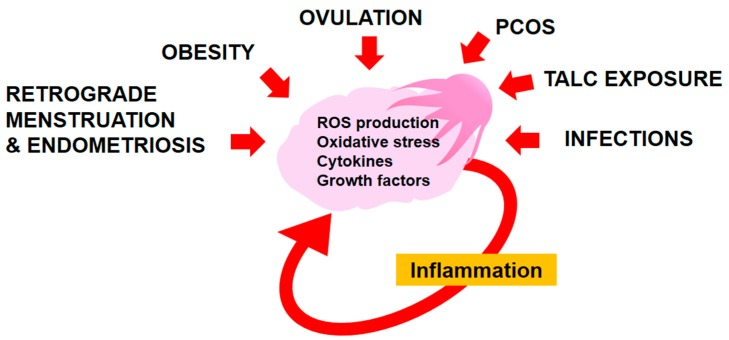 The Role Of Inflammation And Inflammatory Mediators In The Development Progression Metastasis And Chemoresistance Of Epithelial Ovarian Cancer Abstract Europe Pmc