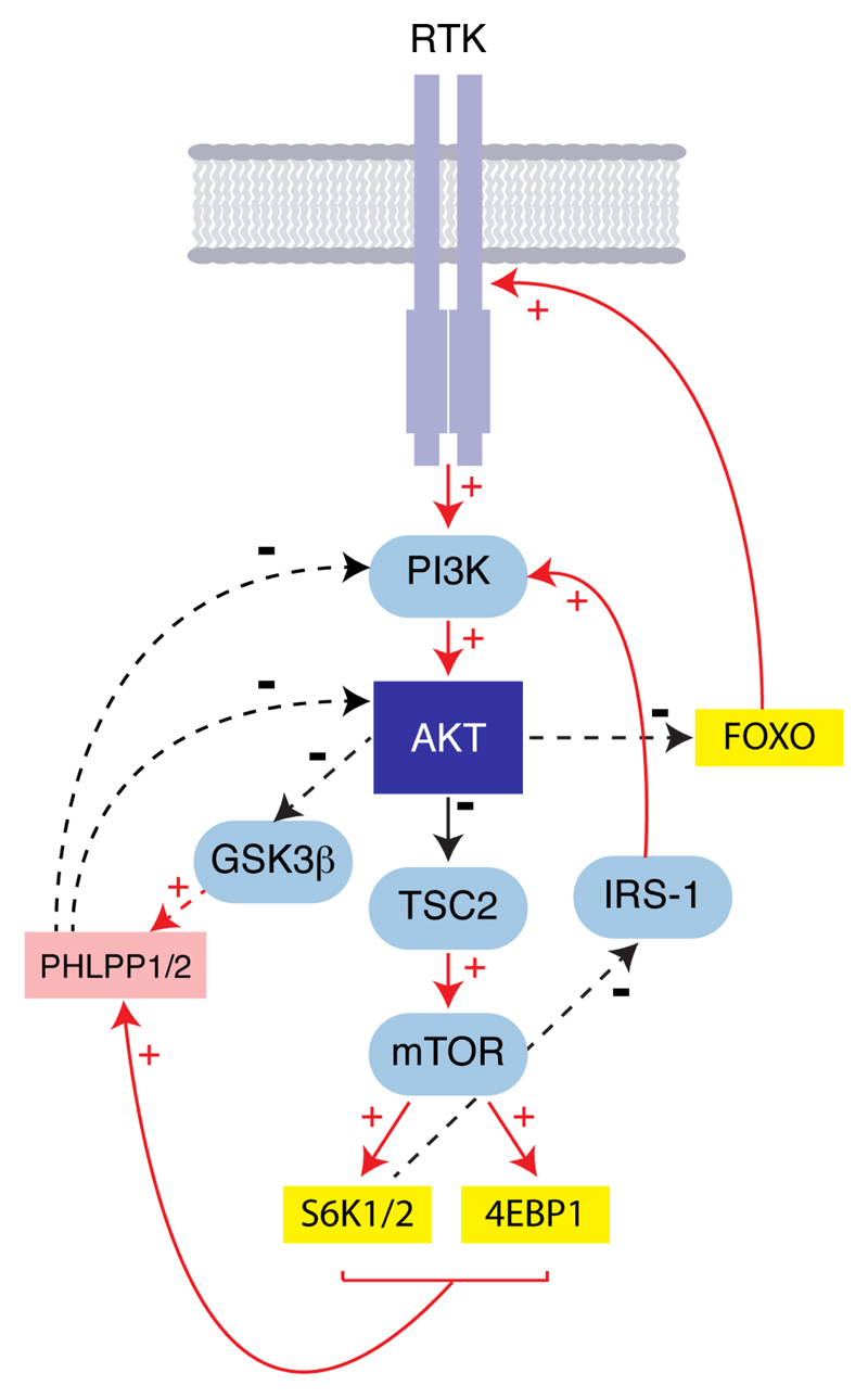 Maximising The Potential Of AKT Inhibitors As Anti Cancer