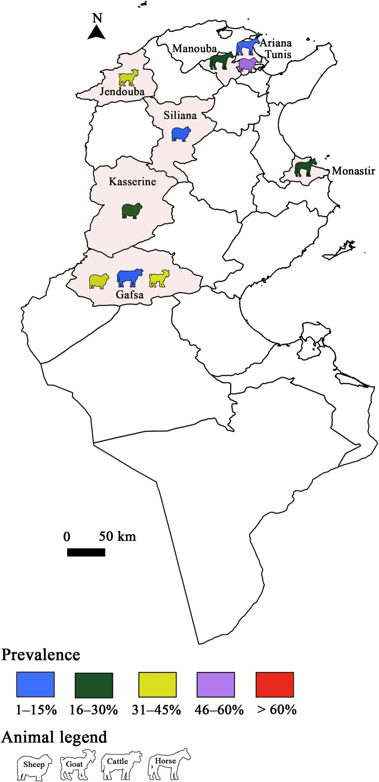 Toxoplasma Gondii Infection And Toxoplasmosis In North Africa A