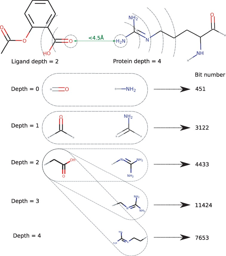 Development of a protein-ligand extended connectivity (PLEC) fingerprint  and its application for binding affinity predictions. - Abstract - Europe  PMC