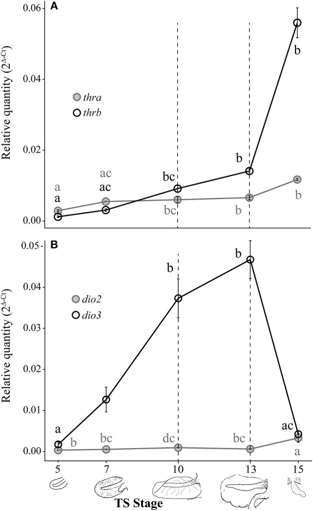 Evolutionary Conservation Of Thyroid Hormone Receptor And