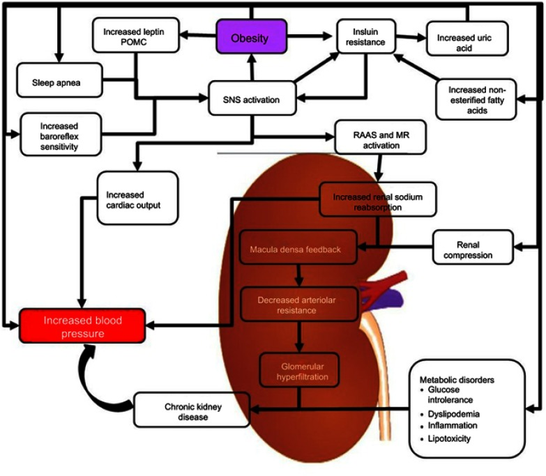 Regulation Of Alternative Splicing In Obesity Induced Hypertension Abstract Europe Pmc