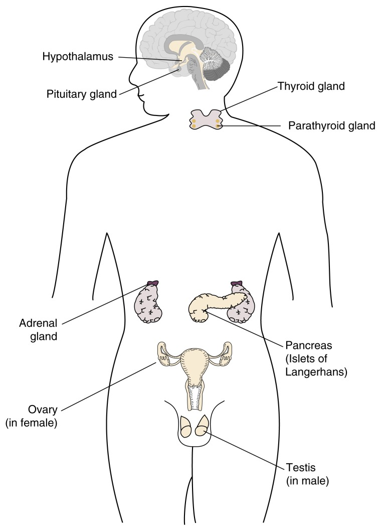 The Endocrine System An Overview Abstract Europe Pmc