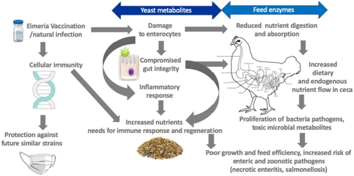 blood plasma nucleotides in the diet of poultry
