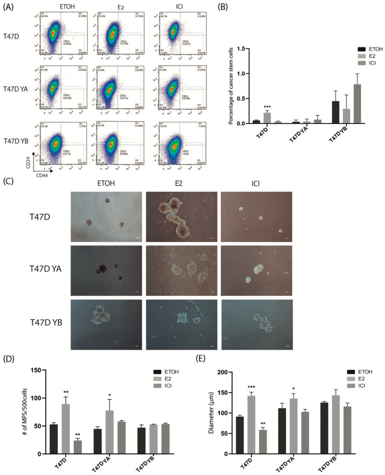 Alterations In Progesterone Receptor Isoform Balance In Normal And Neoplastic Breast Cells Modulates The Stem Cell Population Abstract Europe Pmc